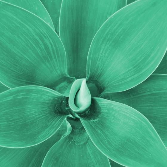 GreenPlantSquare2