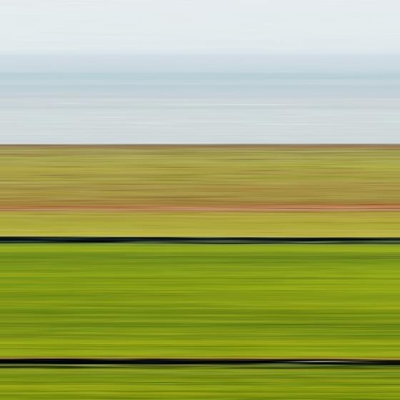 Dorset Field